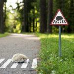 В РФ могут поменять дорожные знаки